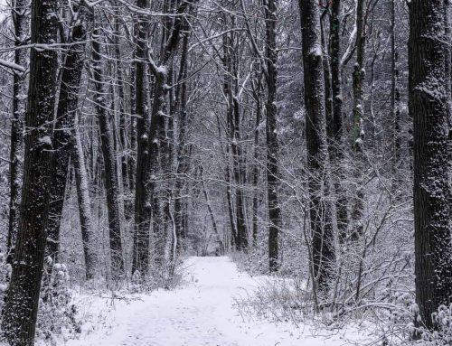 Openhouse Winter Weather Picks